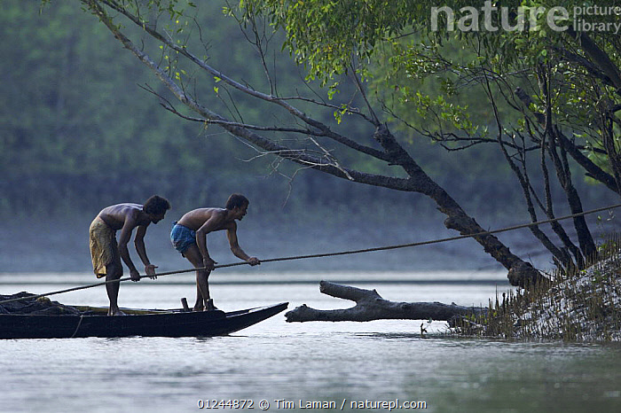 Fishermen in their boat on a small mangrove channel in the Sundarbans, Khulna Province, Bangladesh, March 2006, ASIA,BANGLADESH,BOATS,COASTS,FISHING,MANGROVES,OPEN BOATS,PEOPLE,PROCEDURES,PROFILE,SUNDARBAN,SUNDARBANS,SUNDERBANS,TRADITIONAL,INDIAN-SUBCONTINENT, Tim Laman