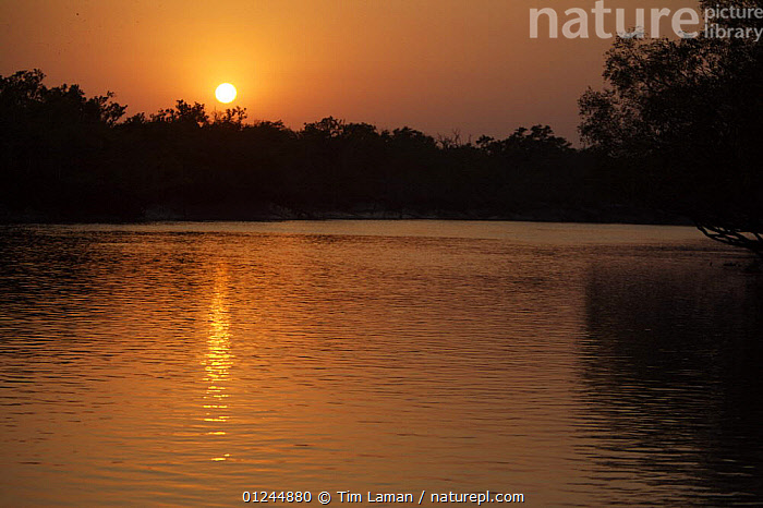Sunset over a mangrove channel, Sundarbans, Khulna Province, Bangladesh, April 2006, ASIA,ATMOSPHERIC,BANGLADESH,COASTS,LANDSCAPES,REFLECTIONS,RIVERS,SUN,SUNDARBAN,SUNDARBANS,SUNDERBANS,SUNSET,INDIAN-SUBCONTINENT, Tim Laman