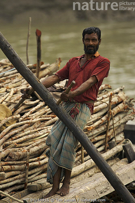 Charcoal wood collector with boat loaded with Goran wood (Ceriops sp) harvested from the mangrove forest, Sundarbans, Khulna Province, Bangladesh, April 2006, ASIA,BANGLADESH,BOATS,COASTS,DEFORESTATION,MANGROVE FOREST,MANGROVES,PEOPLE,RIVERS,SUNDARBAN,SUNDERBANS,TIMBER,VERTICAL, Tim Laman