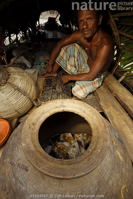 Boatman on the honey collectors boat beside the large clay jar where harvested honey and honeycomb are stored, Sundarbans, Khulna Province, Bangladesh, April 2006, ASIA,BANGLADESH,BOATS,COASTS,MANGROVE FOREST,MANGROVES,PEOPLE,SUNDARBAN,SUNDERBANS,TRADITIONAL,VERTICAL, Tim Laman