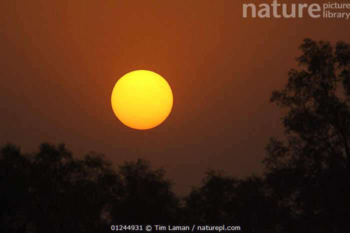 Sunrise over the mangrove forest, Sundarbans, Khulna Province, Bangladesh, April 2006, ASIA,BANGLADESH,COASTS,DAWN,MANGROVE FOREST,MANGROVES,ORANGE,SUN,SUNDARBAN,SUNDERBANS,YELLOW, Tim Laman