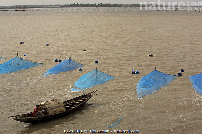 Boats fishing for Shrimp fry in the Passur River, near Chandpai Village. Each fisherman, working from his own boat, has set a net to capture shrimp fry passing on the current as the tide rises and brings water in from the sea to the mangroves. Khulna Province, Bangladesh, April 2006, ASIA,BANGLADESH,BOATS,COASTS,COMMERCIAL,CRUSTACEANS,FARM,FARMING,FISHERIES,FISHING,HIGH ANGLE SHOT,INVERTEBRATES,LANDSCAPES,MANGROVE FOREST,MANGROVES,MANGROVE SWAMPS,NETS,RIVERS,SHRIMP,SUNDARBAN,SUNDARBANS,SUNDERBANS,TRADITIONAL,INDIAN-SUBCONTINENT, Tim Laman