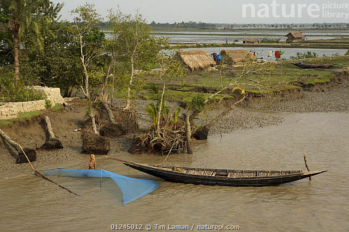 A net is set for catching shrimp fry along the Passur River. Mud and thatch houses of shrimp fry fisherman and shrimp ponds visible in the background, Sundarbans, Khulna Province, Bangladesh, April 2006, ASIA,BANGLADESH,BOATS,BUILDINGS,COASTS,COMMERCIAL,CRUSTACEANS,FISHING,INVERTEBRATES,LANDSCAPES,MANGROVE,MANGROVES,MARINE,NETS,RIVERS,SHRIMP FARMING,SHRIMPS,SUNDARBAN,SUNDARBANS,SUNDERBANS,INDIAN-SUBCONTINENT, Tim Laman