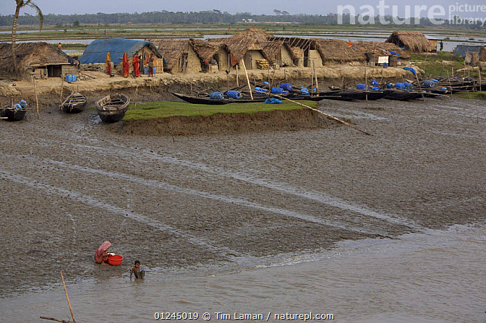 Village of Chandpai on the Passur River, where shrimp fry fishing to supply shrimp for the shrimp ponds is the main industry. Villagers live in simple mud and thatch huts that are washed away by high waters every year. Sunderbans, Khulna Province, Bangladesh, April 2006, ASIA,BANGLADESH,BOATS,BUILDINGS,COASTS,COMMERCIAL,CRUSTACEANS,INVERTEBRATES,LANDSCAPES,MANGROVE,MANGROVES,MARINE,PEOPLE,RIVERS,SHRIMP FARMING,SHRIMPS,SUNDARBAN,SUNDARBANS,SUNDERBANS,VILLAGES,INDIAN-SUBCONTINENT, Tim Laman