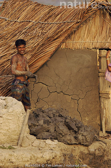 Man repairing home in the village of Chandpai on the Passur River, where shrimp fry fishing to supply shrimp for the shrimp ponds is the main industry. Villagers live in simple mud and thatch huts that are washed away by high waters every year. Sunderbans, Khulna Province, Bangladesh, April 2006, ASIA,BANGLADESH,BUILDINGS,COASTS,COMMERCIAL,CRUSTACEANS,HOMES,INVERTEBRATES,LANDSCAPES,MANGROVE,MANGROVES,MARINE,PEOPLE,RIVERS,SHRIMP FARMING,SHRIMPS,SUNDARBAN,SUNDARBANS,SUNDERBANS,VERTICAL,INDIAN-SUBCONTINENT, Tim Laman