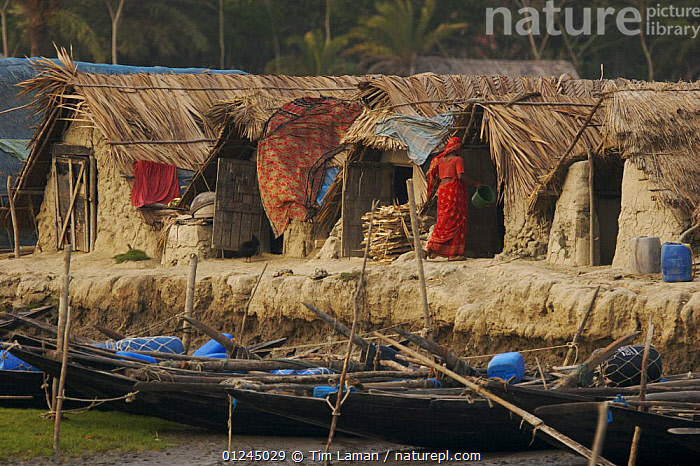 Traditional houses in the village of Chandpai on the Passur River, where shrimp fry fishing to supply shrimp for the shrimp ponds is the main industry. Villagers live in simple mud and thatch huts that are washed away by high waters every year. Sunderbans, Khulna Province, Bangladesh, April 2006, ASIA,BANGLADESH,BOATS,BUILDINGS,COASTS,COMMERCIAL,CRUSTACEANS,INVERTEBRATES,LANDSCAPES,MANGROVE,MANGROVES,MARINE,PEOPLE,RIVERS,SHRIMP FARMING,SHRIMPS,SUNDARBAN,SUNDARBANS,SUNDERBANS,INDIAN-SUBCONTINENT, Tim Laman