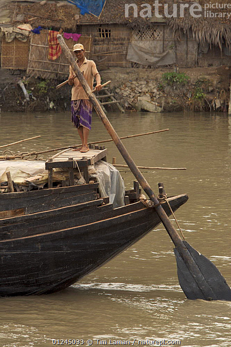 Man operating the oars to power a cargo boat on the Rupsha River, Sundarbans, Khulna, Bangladesh, April 2006, ASIA,BANGLADESH,BOATS,COASTS,LANDSCAPES,MANGROVE,MANGROVES,MANOEUVRES,MARINE,PEOPLE,PROCEDURES,RIVERS,RUDDERS,STERNS,SUNDARBAN,SUNDARBANS,SUNDERBANS,TRADITIONAL,VERTICAL,WOODEN,INDIAN-SUBCONTINENT,BOAT-PARTS, Tim Laman