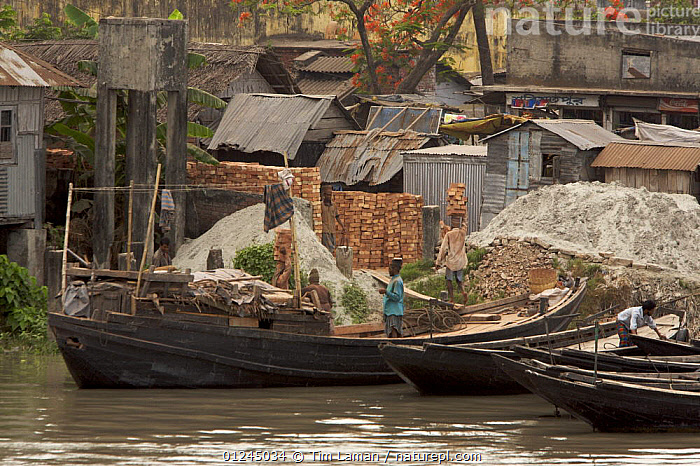 Men unloading bricks from a boat by carrying them on their head. Sundarbans, Khulna, Bangladesh, April 2006, ASIA,BANGLADESH,BOATS,BUILDINGS,COASTS,FLEETS,LANDSCAPES,MANGROVE,MANGROVES,MARINE,MOORED,PEOPLE,RIVERS,SUNDARBAN,SUNDARBANS,SUNDERBANS,WORKING,INDIAN-SUBCONTINENT, Tim Laman
