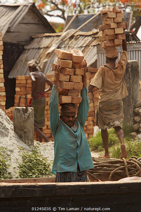 Men unloading bricks from a boat by carrying them on their head. Sundarbans, Khulna, Bangladesh, April 2006, ASIA,BANGLADESH,BUILDINGS,COASTS,LANDSCAPES,MANGROVE,MANGROVES,PEOPLE,SUNDARBAN,SUNDARBANS,SUNDERBANS,VERTICAL,WORKING,INDIAN-SUBCONTINENT, Tim Laman