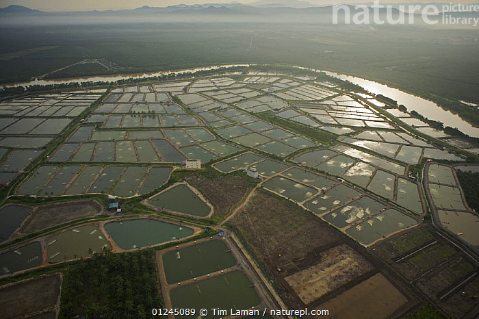 Aerial view of shrimp ponds and river on mainland part of Pulau Pinang province, Malaysia. May 2006, AERIALS,ASIA,COASTS,COMMERCIAL,CRUSTACEANS,INVERTEBRATES,LANDSCAPES,MALAYSIA,MARINE,RIVERS,SHRIMP FARMING,SOUTH-EAST-ASIA, Tim Laman