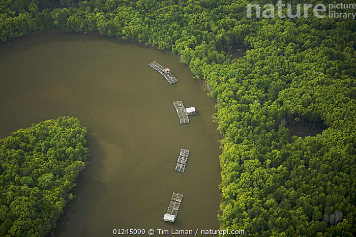 Aerial view of mangroves and a river bend with fish rearing enclosures in the Sungai Petani area, Perak, Malaysia. May 2006, AERIALS,ASIA,COASTS,COMMERCIAL,FISH FARMING,LANDSCAPES,MALAYSIA,MANGROVE FOREST,MANGROVES,MANGROVE SWAMPS,RIVER,RIVERS,SOUTH-EAST-ASIA, Tim Laman