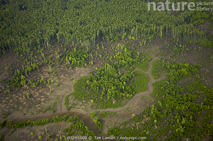 An aerial view of regenerating mangroves in the Sungai Petani area, Perak, Malaysia. May 2006, AERIALS,ASIA,COASTS,LANDSCAPES,MALAYSIA,MANGROVE FOREST,MANGROVES,MANGROVE SWAMPS,REGENERATION,RIVERS,SOUTH-EAST-ASIA, Tim Laman