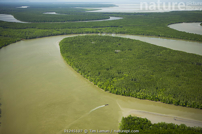Aerial view of Matang mangrove forest, site of 100 year old managed mangrove harvesting program for charcoal production on a 30 year rotation. Taiping vicinity, Perak, Malaysia. May 2006, AERIALS,ASIA,COASTS,LANDSCAPES,MALAYSIA,MANGROVE FOREST,MANGROVES,RESERVE,RIVER,RIVERS,SUSTAINABLE, Tim Laman