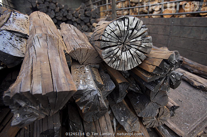 Charcoal loaded in the back of a truck, made from  {Rhizophora sp} mangrove wood from the Matang mangrove forest, Taiping vicinity, Perak, Malaysia. May 2006, ASIA,FUEL,MALAYSIA,MANGROVE,MANGROVES,TIMBER,WOOD, Tim Laman