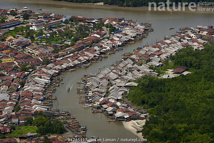 Aerial view of Sepetang fishing village, on the edge of the Matang mangrove forest. Healthy mangroves promote a healthy fishery. Taiping vicinity, Perak, Malaysia. May 2006, AERIALS,ASIA,BUILDINGS,COASTS,LANDSCAPES,MANGROVE,MANGROVES,MANGROVE SWAMPS,RIVERS,VILLAGES, Tim Laman