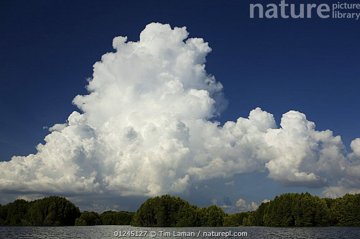 A giant thunderhead cloud building up over the Sungai Petani mangrove forest. Sungai Petani vicinity, Kedah, Malaysia. May 2006, ASIA,CLOUDS,LANDSCAPES,MANGROVES,RESERVE,SKY,WEATHER, Tim Laman