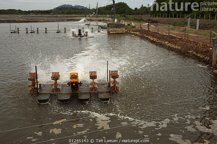 Industrial scale shrimp farm with aerators in operation. Kedah, Malaysia. May 2006, ASIA,COASTS,COMMERCIAL,DEFORESTATION,ENVIRONMENTAL,LANDSCAPES,MALAYSIA,MANGROVE,MANGROVES,SHRIMP FARMING,SOUTH-EAST-ASIA, Tim Laman