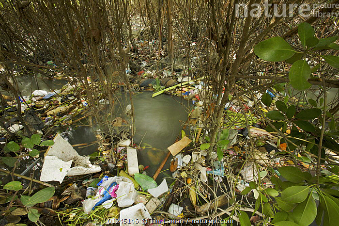 Rubbish caught up amongst the mangroves from a badly polluted river draining a major Balinese city. Sanur vicinity, Bali, Indonesia. May 2006, ASIA,ENVIRONMENTAL,LANDSCAPES,MANGROVE,MANGROVES,MANGROVE SWAMPS,POLLUTION,REFUSE, Tim Laman