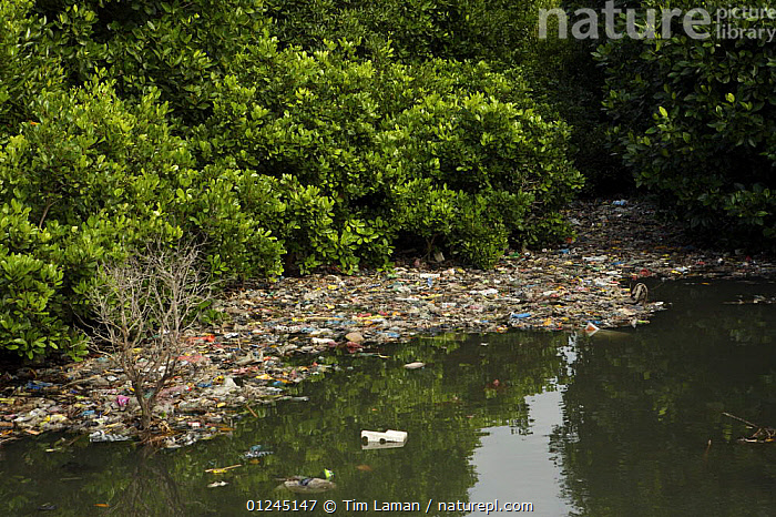 Rubbish caught up amongst the mangroves from a badly polluted river draining a major Balinese city.