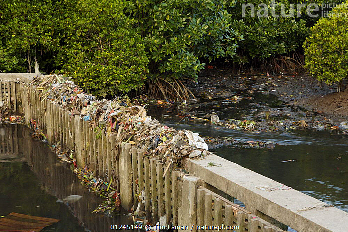 Rubbish clogs a mangrove channel in Bali, where trash is still disposed of in rivers. Sanur vicinity, Bali, Indonesia. May 2006, ASIA,ENVIRONMENTAL,LANDSCAPES,MANGROVE,MANGROVES,POLLUTION,RIVERS,WATER,WEIR, Tim Laman