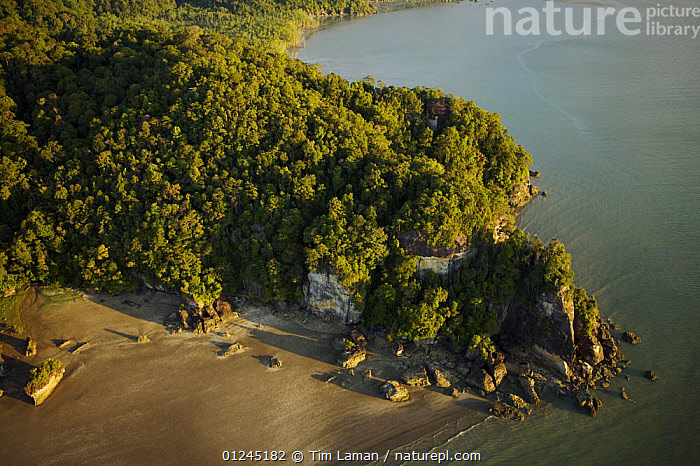 Aerial view of a rocky part of the Bako peninsula coastline coverd in rainforest, Bako National Park, Sarawak, Borneo, Malaysia. June 2006, AERIALS,ASIA,BORNEO,COASTS,LANDSCAPES,MALAYSIA,RESERVE,TROPICAL RAINFOREST,SOUTH-EAST-ASIA, Tim Laman