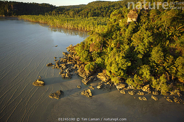 Aerial view of a rocky part of the Bako peninsula coastline covered in rainforest, with mangrove forest in the shallow bay in the background, Bako National Park, Sarawak, Borneo, Malaysia, June 2006, AERIALS,ASIA,BORNEO,COASTS,LANDSCAPES,MALAYSIA,MANGROVE,MANGROVES,RESERVE,TROPICAL RAINFOREST,SOUTH-EAST-ASIA, Tim Laman