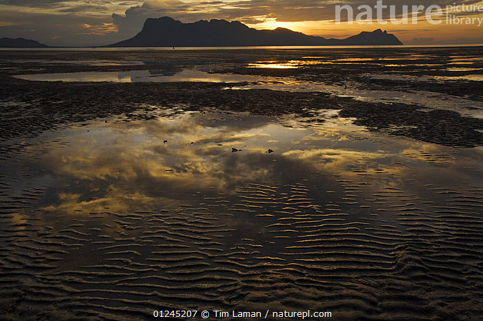 Clouds after sunset reflected in pools of water on the mangrove mudflats, Santubong Mountain in the distance, Bako National Park, Sarawak, Borneo, Malaysia, June 2006, ASIA,ATMOSPHERIC,CLOUDS,COASTS,LANDSCAPES,REFLECTIONS,RESERVE,SUNSET,WATER,SOUTH-EAST-ASIA,Weather, Tim Laman