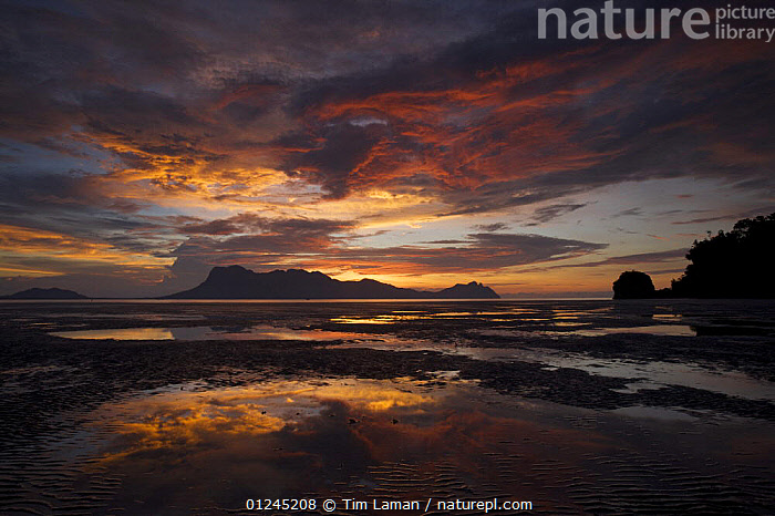 Clouds after sunset reflected in pools of water on the mangrove mudflats, Santubong Mountain in the distance, Bako National Park, Sarawak, Borneo, Malaysia, June 2006, ASIA,ATMOSPHERIC,CLOUDS,COASTS,LANDSCAPES,ORANGE,REFLECTIONS,RESERVE,SUNSET,SOUTH-EAST-ASIA,Weather, Tim Laman