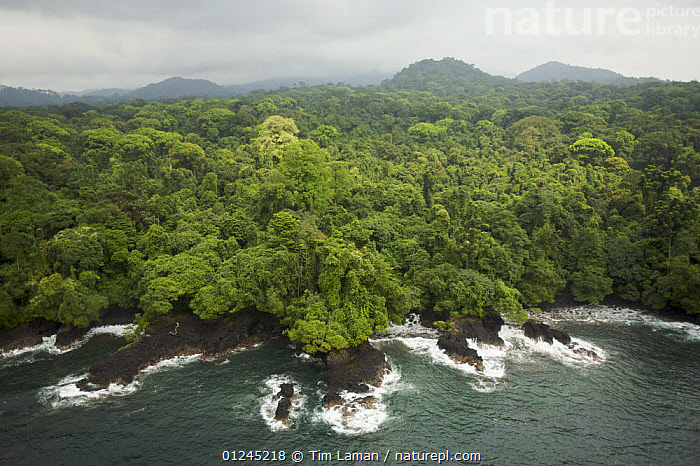 Aerial view of rainforest canopy on southern coast of Bioko Island, Equatorial Guinea, Central Africa. January 2008, AERIALS,CENTRAL AFRICA,COASTS,ILCP,LANDSCAPES,RAVE,TROPICAL RAINFOREST,Africa,WEST-AFRICA, Tim Laman