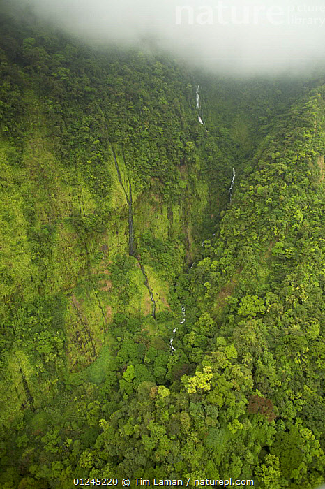 Aerial view of river gorge of the Rio Iladyi on the Southwest of Bioko Island, Equatorial Guinea, West Africa, with cascades in the upper gorge visible. January 2008, AERIALS,CENTRAL AFRICA,CLOUDS,GREEN,ILCP,LANDSCAPES,RAVE,RIVERS,TROPICAL RAINFOREST,VALLEY,VERTICAL,WATERFALLS,Africa,Weather, Tim Laman