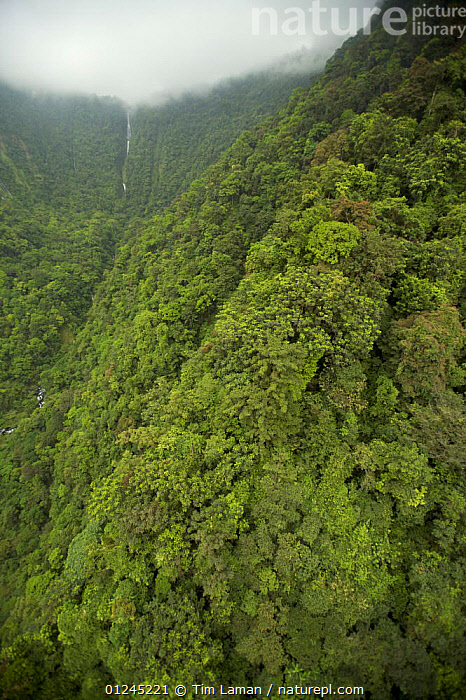 Aerial view of river gorge of the Rio Iladyi on the Southwest of Bioko Island, Equatorial Guinea, Central Africa, with cascades in the upper gorge visible. January 2008, AERIALS,CENTRAL AFRICA,CLOUDS,GREEN,ILCP,LANDSCAPES,RAVE,RIVERS,TROPICAL RAINFOREST,VERTICAL,WATERFALLS,Africa,Weather, Tim Laman