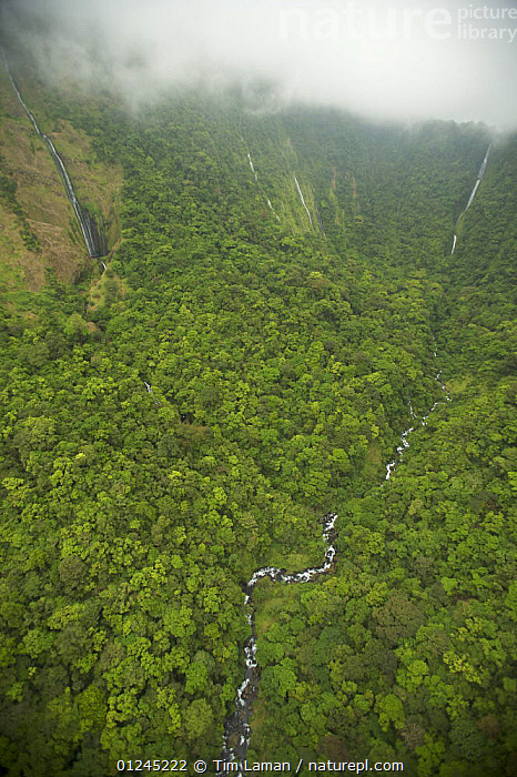 Aerial view of river gorge of the Rio Iladyi on the Southwest of Bioko Island, Equatorial Guinea, Central Africa, with cascades in the upper gorge visible. January 2008, AERIALS,CENTRAL AFRICA,CLOUDS,GREEN,ILCP,LANDSCAPES,RAVE,RIVERS,TROPICAL RAINFOREST,VALLEY,VERTICAL,WATERFALLS,Africa,Weather, Tim Laman