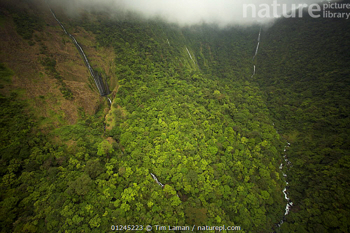 Aerial view of river gorge of the Rio Iladyi on the Southwest of Bioko Island, Equatorial Guinea, Central Africa, with cascades in the upper gorge visible. January 2008, AERIALS,CENTRAL AFRICA,CLIFFS,CLOUDS,ILCP,LANDSCAPES,RAVE,RIVERS,TROPICAL RAINFOREST,VALLEY,WATERFALLS,Africa,Geology,Weather,WEST-AFRICA, Tim Laman