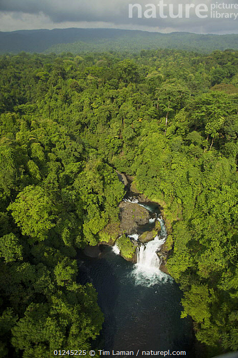 Aerial view of waterfall and rain forest near Punta Dolores, south coast region of Bioko Island, Equatorial Guinea, Central Africa. January 2008, AERIALS,CENTRAL AFRICA,ILCP,LANDSCAPES,RAVE,RIVERS,TROPICAL RAINFOREST,VERTICAL,WATERFALLS,Africa,WEST-AFRICA, Tim Laman