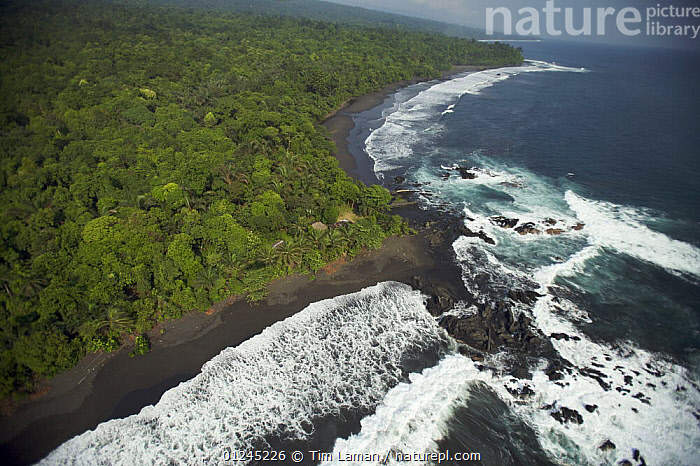 """Aerial view of Punta Sagre, site of """"Moraka Playa"""" base camp of the Bioko Biodiversity Protection Program 2008 Caldera Expedition, on the south coast of Bioko Island, Equatorial Guinea, Central Africa. January 2008, AERIALS,CENTRAL AFRICA,COASTS,HEADLANDS,ILCP,LANDSCAPES,RAVE,SURF,TROPICAL RAINFOREST,WAVES,Africa,WEST-AFRICA, Tim Laman"""