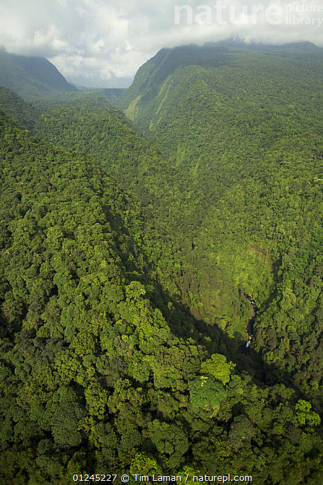 Aerial view of gorge of the Rio Ole, emerging from the Gran Caldera Volcanica de Luba, Bioko Island, Equatorial Guinea, Central Africa. January 2008, AERIALS,CENTRAL AFRICA,ILCP,LANDSCAPES,RAVE,TROPICAL RAINFOREST,VERTICAL,VOLCANOES,Africa,Geology, Tim Laman