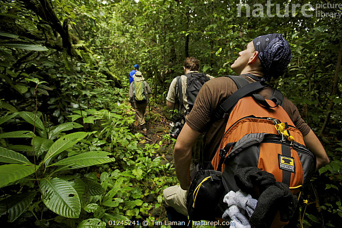 Expedition crew members hike in the forest of Bioko Island, Equatorial Guinea, Rapid Assessment Visual Expedition, International League of Conservation Photographers, January 2008. Model released, CENTRAL AFRICA,HIKING,ILCP,LANDSCAPES,PEOPLE,RAVE,RESEARCH,TROPICAL RAINFOREST,Africa, Tim Laman
