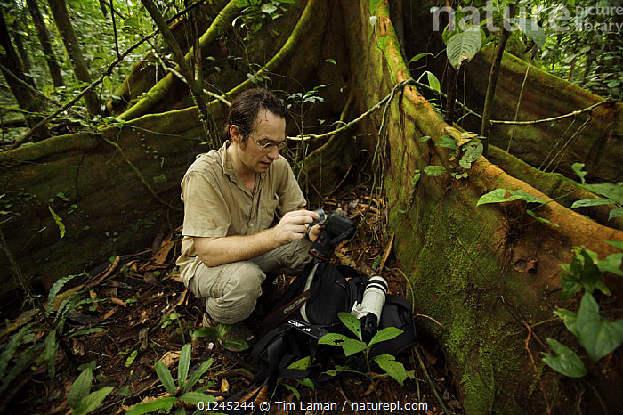 Photographer, Christian Ziegler, at work in the rainforest of Bioko, photographing a large fig tree (Ficus sp) Bioko Island, Equatorial Guinea, Rapid Assessment Visual Expedition, International League of Conservation Photographers, January 2008. Model released, CAMERA,CENTRAL AFRICA,ILCP,LANDSCAPES,PHOTOGRAPHY,RAVE,RESEARCH,ROOTS,TREES,TROPICAL RAINFOREST,UNDERSTOREY,Africa,PLANTS, Tim Laman