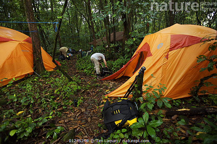 Campsite in the rainforest of Bioko Island. Intermediate camp (Camp Peter) on the trek into the Caldera. Bioko Island, Equatorial Guinea, Rapid Assessment Visual Expedition, International League of Conservation Photographers, January 2008. Model released, CAMPING,CENTRAL AFRICA,ILCP,LANDSCAPES,ORANGE,PEOPLE,RAVE,RESEARCH,TENTS,TROPICAL RAINFOREST,Africa, Tim Laman