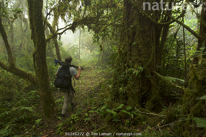 Photographer, Christian Ziegler, carries his camera through the rainforest of Bioko's Caldera, Bioko, Equitorial Guinea, International League of Conservation Photographers, January 2008. Model released, CAMERA,CENTRAL AFRICA,ILCP,LANDSCAPES,PEOPLE,PHOTOGRAPHY,RAVE,TROPICAL RAINFOREST,Africa, Tim Laman