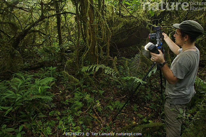 Photographer, Christian Ziegler, photographing the rainforest habitat in the Caldera on Bioko Island, Equatorial Guinea, International League of Conservation Photographers, January 2008. Model released, CAMERA,CENTRAL AFRICA,ILCP,LANDSCAPES,PEOPLE,PHOTOGRAPHY,RAVE,RESEARCH,TROPICAL RAINFOREST,Africa, Tim Laman