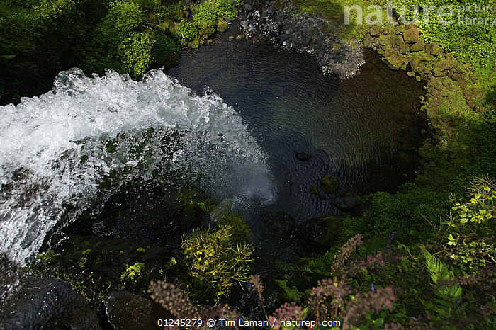 Looking down over a waterfall on the Rio Santo Antonio in the upper region of the Gran Caldera Volcanica de Luba, Bioko Island, Equatorial Guinea, January 2008, CENTRAL AFRICA,HIGH ANGLE SHOT,ILCP,LANDSCAPES,RAVE,RIVERS,TROPICAL RAINFOREST,WATER,WATERFALLS,Africa,WEST-AFRICA, Tim Laman