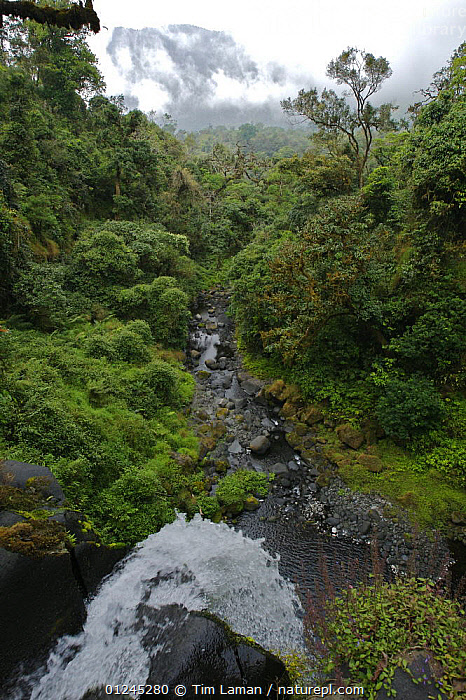 Waterfall on the Rio Santo Antonio in the upper region of the Gran Caldera Volcanica de Luba, (Caldera wall is visible in the background) Bioko Island, Equatorial Guinea, January 2008, CENTRAL AFRICA,ILCP,LANDSCAPES,RAVE,RIVERS,TROPICAL RAINFOREST,VERTICAL,WATER,WATERFALLS,Africa, Tim Laman