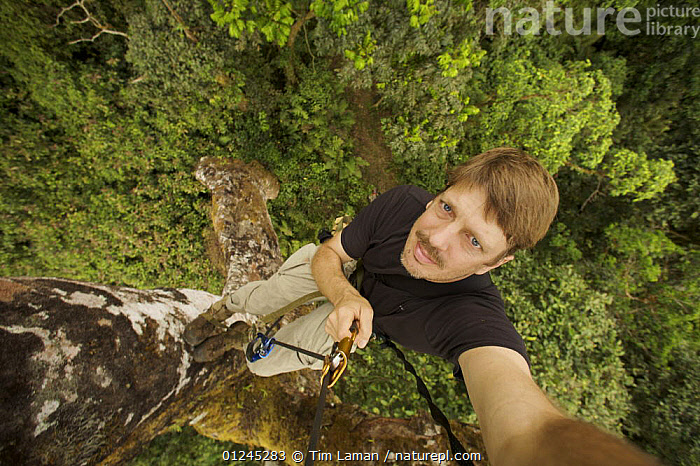 Self portrait of Photographer, Tim Laman, climbing an emergent mahogany tree in the Gran Caldera Volcanica de Luba, Bioko Island, Equatorial Guinea, Rapid Assessment Visual Unit, International League of Conservation Photographers, January 2008. Model released, CANOPY,CENTRAL AFRICA,CLIMBING,HIGH ANGLE SHOT,ILCP,MAN,PEOPLE,RAVE,TREES,TROPICAL RAINFOREST,Africa,PLANTS, Tim Laman