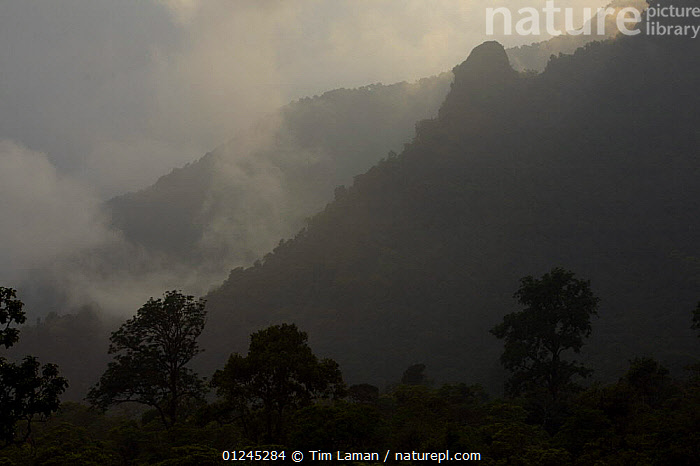 Canopy level view of the rainforest of the Gran Caldera Volcanica de Luba, with surrounding walls of the caldera, Bioko Island, Equatorial Guinea, January 2008, CENTRAL AFRICA,CLOUDS,ILCP,LANDSCAPES,MIST,RAVE,TROPICAL RAINFOREST,Africa,Weather, Tim Laman
