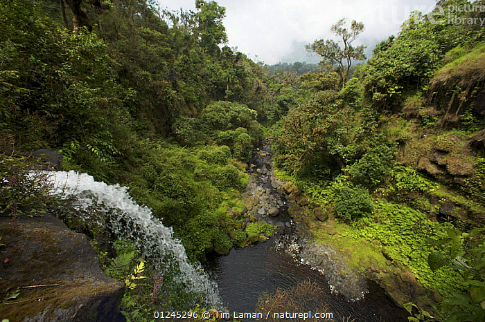 Waterfall on the Rio Santo Antonio in the upper region of the Gran Caldera Volcanica de Luba, Caldera wall is visible in the background, Bioko Island, Equatorial Guinea, January 2008, CENTRAL AFRICA,ILCP,LANDSCAPES,RAVE,RIVERS,STREAMS,TROPICAL RAINFOREST,WATER,WATERFALLS,Africa, Tim Laman