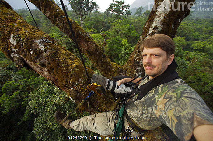 Photographer, Tim Laman, in the canopy of an emergent mahogany tree with canopy level view of the rainforest of the Gran Caldera Volcanica de Luba and surrounding walls of the caldera, Bioko Island, Equatorial Guinea, Rapid Assessment Visual Expedition, International League of Conservation Photographers, January 2008. Model released, CENTRAL AFRICA,CLIMBING,ILCP,LANDSCAPES,PEOPLE,PHOTOGRAPHY,PORTRAITS,RAVE,RESEARCH,TROPICAL RAINFOREST,Africa, Tim Laman