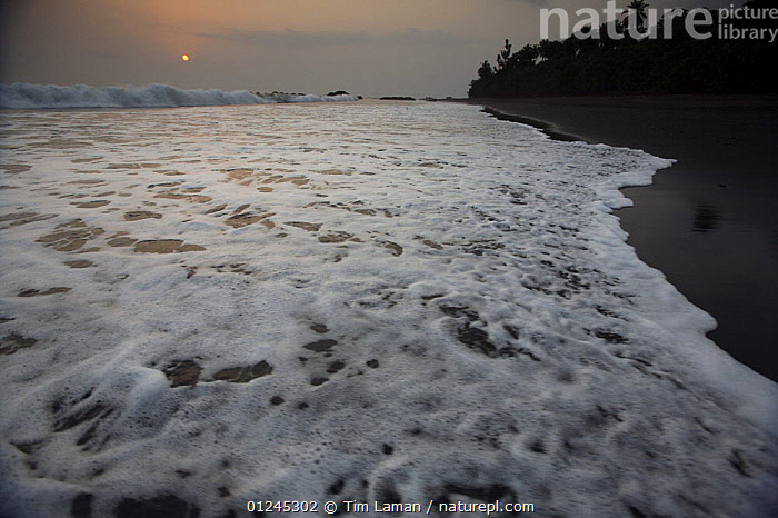 Sunset and surf from the volcanic black sand beach on South coast of Bioko Island, Equatorial Guinea, January 2008., BEACHES,CENTRAL AFRICA,COASTS,ILCP,LANDSCAPES,RAVE,SUNSET,SURF,SWASH,TIDE,WAVES,Africa,WEST-AFRICA, Tim Laman