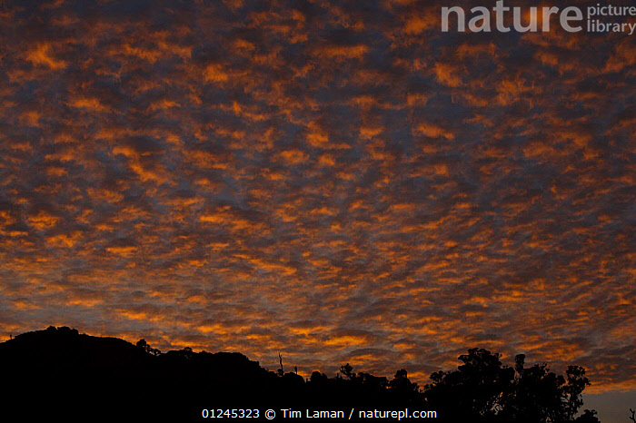 Sunset from high on Pico Basile, Bioko Island, Equatorial Guinea, January 2008, ATMOSPHERIC,CENTRAL AFRICA,CLOUDS,ILCP,ORANGE,RAVE,SUNSET,Africa,Weather,WEST-AFRICA, Tim Laman