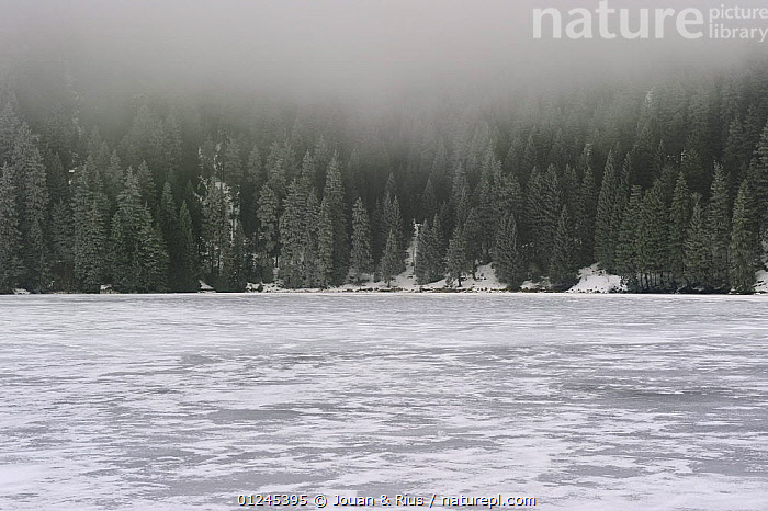Lac Vert frozen over in winter, Ballons des Vosges Natural Park, Vosges, Lorraine, France, December 2008, EUROPE,FORESTS,FRANCE,ICE,LAKES,LANDSCAPES,MIST,RESERVE,SNOW,TREES,WINTER,PLANTS,Catalogue1, Jouan & Rius